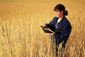 woman-in-wheat-field-RGB